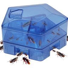 Pest Control Klang Valley